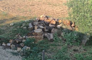 Fuelwood